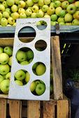 Apple picking — Stock Photo