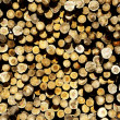 Stock Photo: Larch logs