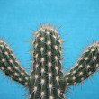 Spiky Cactus. — Stock Photo