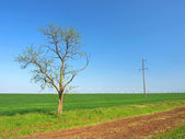 Wind-turbines and a tree on a green field — Stock Photo