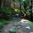 Mountain trail — Stock Photo #6235084