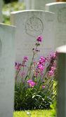 Cemitérios — Fotografia Stock