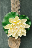 Water lily decoration — Stock Photo