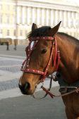 Pferdekopf — Stockfoto