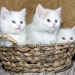 Three kittens in a basket — Stockfoto