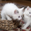 Stock Photo: Entertainments of restless kittens