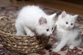 Entertainments of restless kittens — Stock Photo