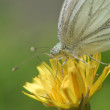 Butterfly on a flower - Lizenzfreies Foto