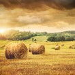 Field of freshly bales of hay with beautiful sunset - Stock Photo