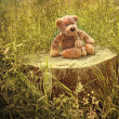 Small little bears on old wooden stump in grass - Stok fotoğraf