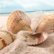 Seashells in the sand at the beach — Stock Photo #5483379