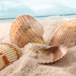 Seashells in the sand at the beach — Stock Photo