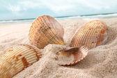 ракушки в песке на пляже — Стоковое фото