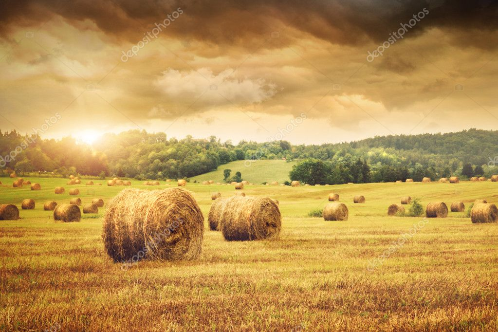 Field of freshly cut bales of hay with beautiful sunset  Stok fotoraf #5483370