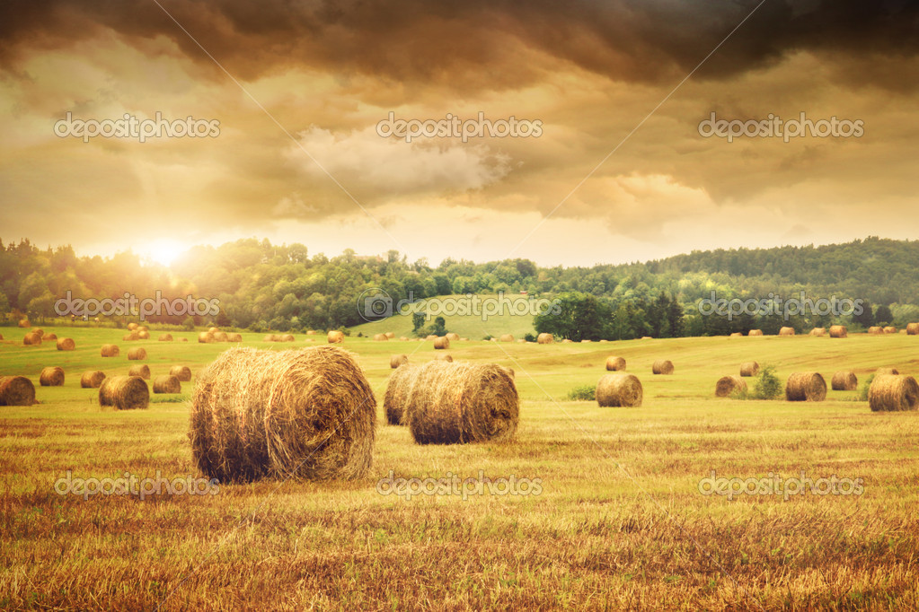Field of freshly cut bales of hay with beautiful sunset  Foto Stock #5483370