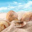 Seashells in the sand at the beach - Stock Photo
