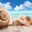 Seashells on the beach — Stock Photo