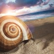Large seashell in the sand - Stock Photo