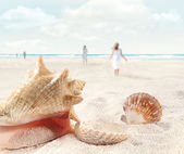 Beach scene with walking and seashells — Stock Photo