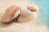 Seashells in the wet sand — Stock Photo