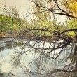 View of water swamp in early spring - Stock Photo