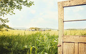 Old peeling door with rural landscape — Stock Photo