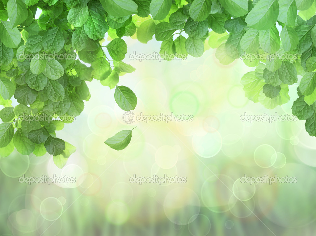 Spring Background With Leaves and brokeh effect background  Stock Photo #5850017