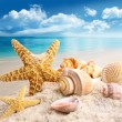 Starfish and seashells on the beach - Stok fotoğraf