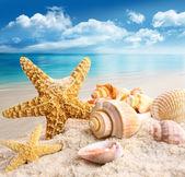 Seesterne und muscheln am strand — Stockfoto