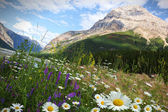 Field of daisies and wild flowers — Stock Photo