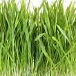 Stock Photo: Closeup of wheatgrass on white