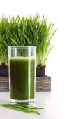 Glass of wheatgrass on white — Stock Photo