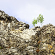 Birch at the top of the cliff against the sky - Stock Photo