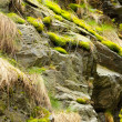 Rock covered with green moss — Stock Photo