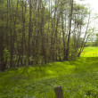 Stock Photo: Large clearing in forest of green grass