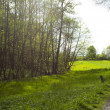 Large clearing in the forest of green grass — Stock Photo