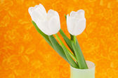 White tulips in a vase on an orange background — Stock Photo