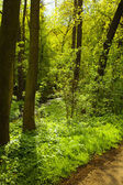 Path in green forest — Stock Photo