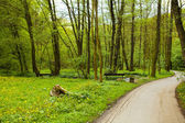Bench near the stream in the field of dandelions in a forest — Stock Photo