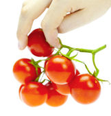 A bunch of tomatoes in the hands of a man isolated on white — Stock Photo