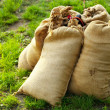 Sandbags lying on green grass - Stock Photo