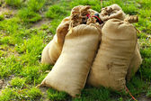 Sandbags lying on green grass — Stock Photo