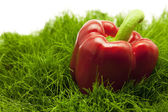 Red pepper lying on green grass — Stock Photo