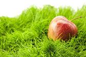 Apple lying on green grass — Stock Photo
