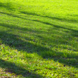 Background of green grass — Stock Photo