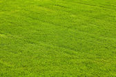 Background tonsure on the grass lawn — Stock Photo