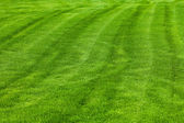 Pozadí mnišské trávy — Stock fotografie
