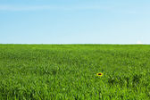Green field on the background of blue sky — Foto de Stock