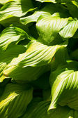 Background of green leaves — Stock Photo