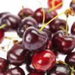 Background of cherry - Stock Photo
